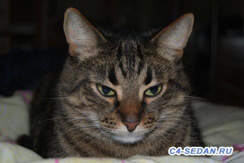 Пристраиваем своего кота- печаль - 1376070256328.jpg