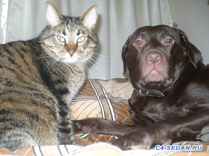 Пристраиваем своего кота- печаль - P1040857 (1).JPG