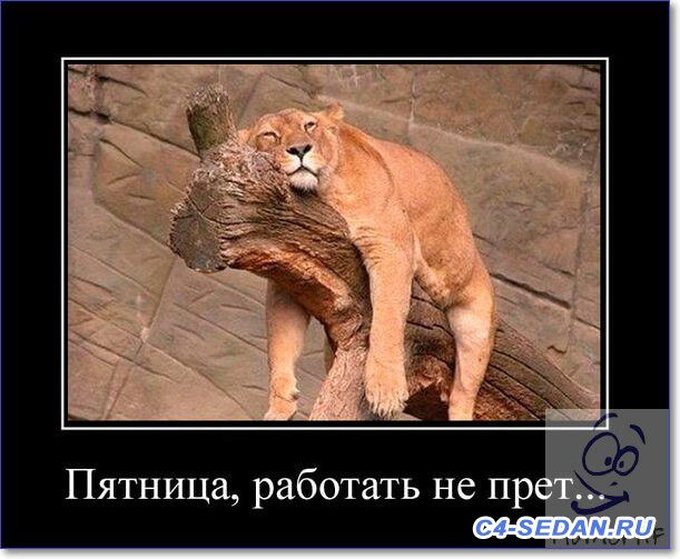 С пятницей  - Friday-pictures-funny-15.jpg
