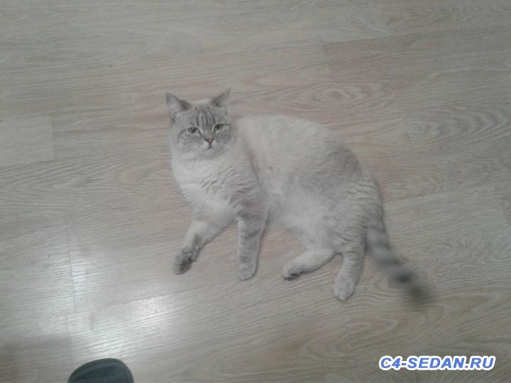 Пристраиваем своего кота- печаль - 20191103_120858[1].jpg