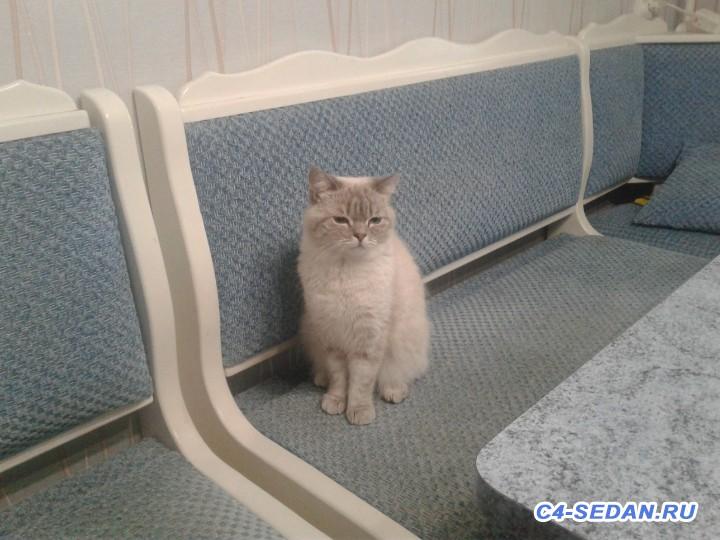 Пристраиваем своего кота- печаль - 20191103_121001[1].jpg