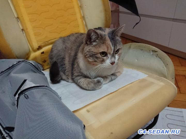Не работает подогрев сидений - DSCPDC_0003_BURST20181110143844807_COVER.JPG